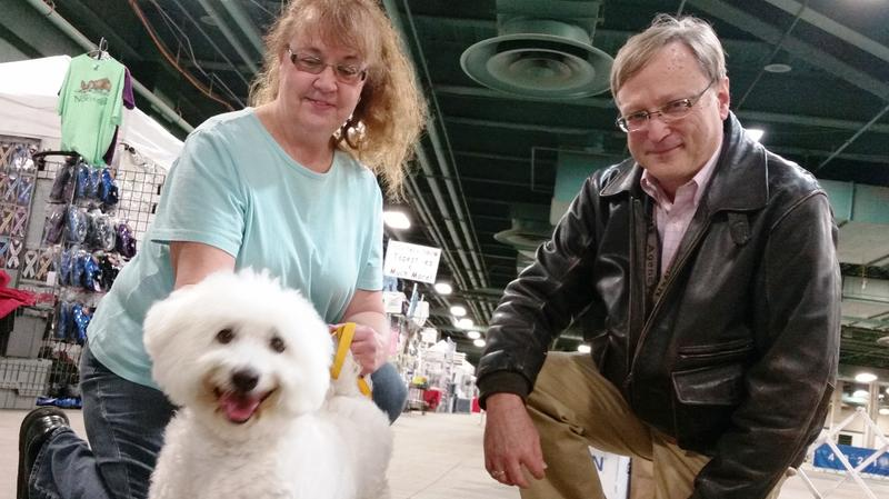 Ingham Kennel Club dog show photo