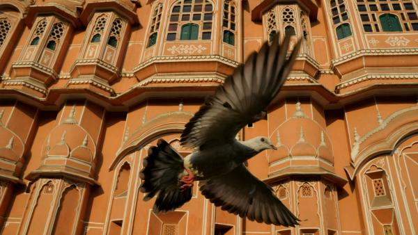 Earthflight is a special Nature presentation that takes viewers around the world with birds of six continents.
