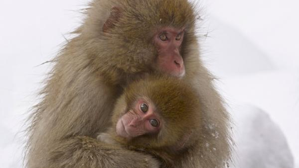 Two monkeys huddle together