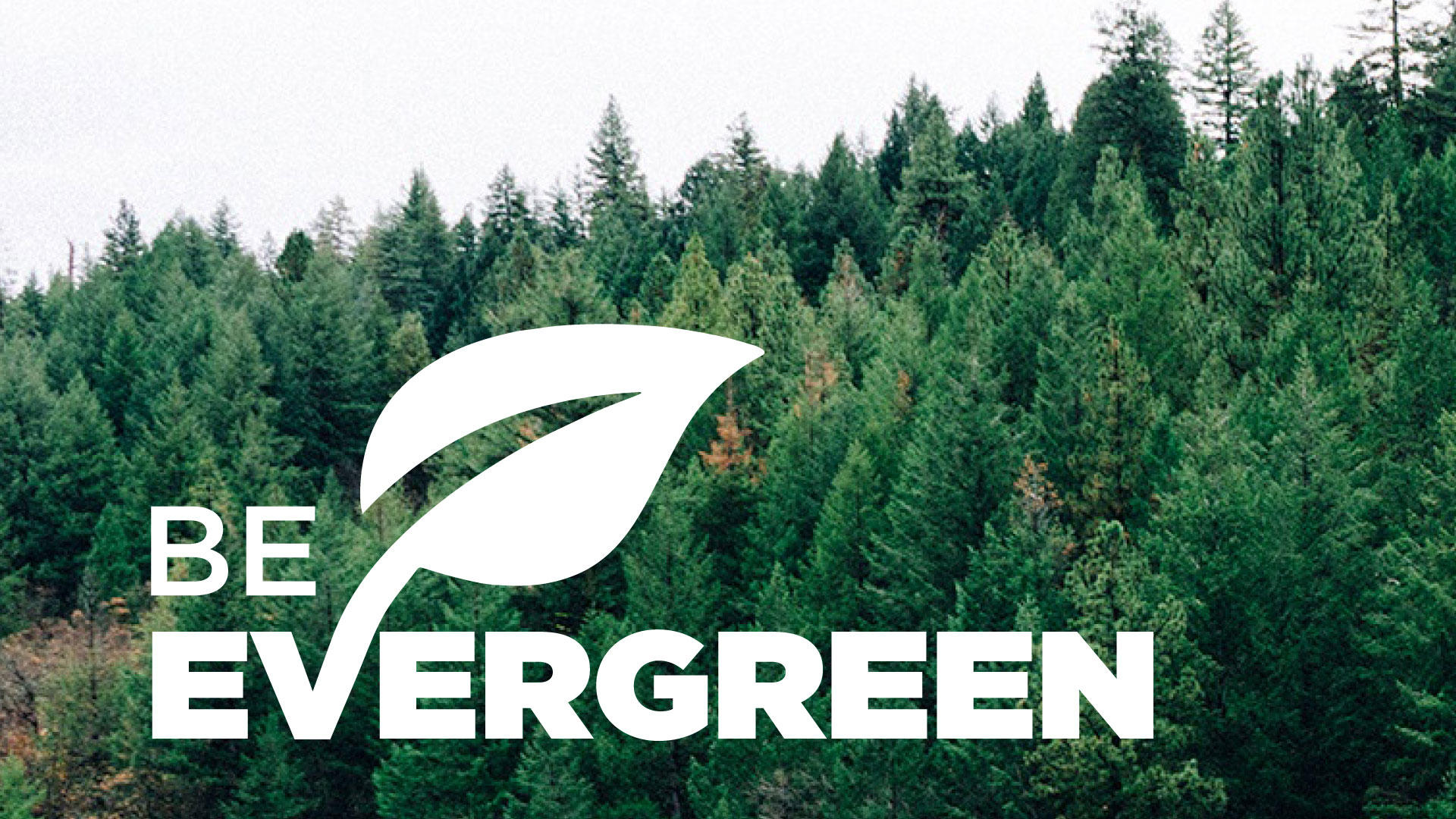 Image result for evergreen