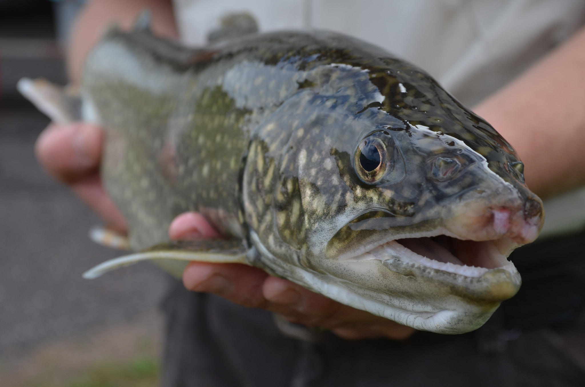 Could fish farm expansion in mi hurt the great lakes wkar for Trout farm fishing