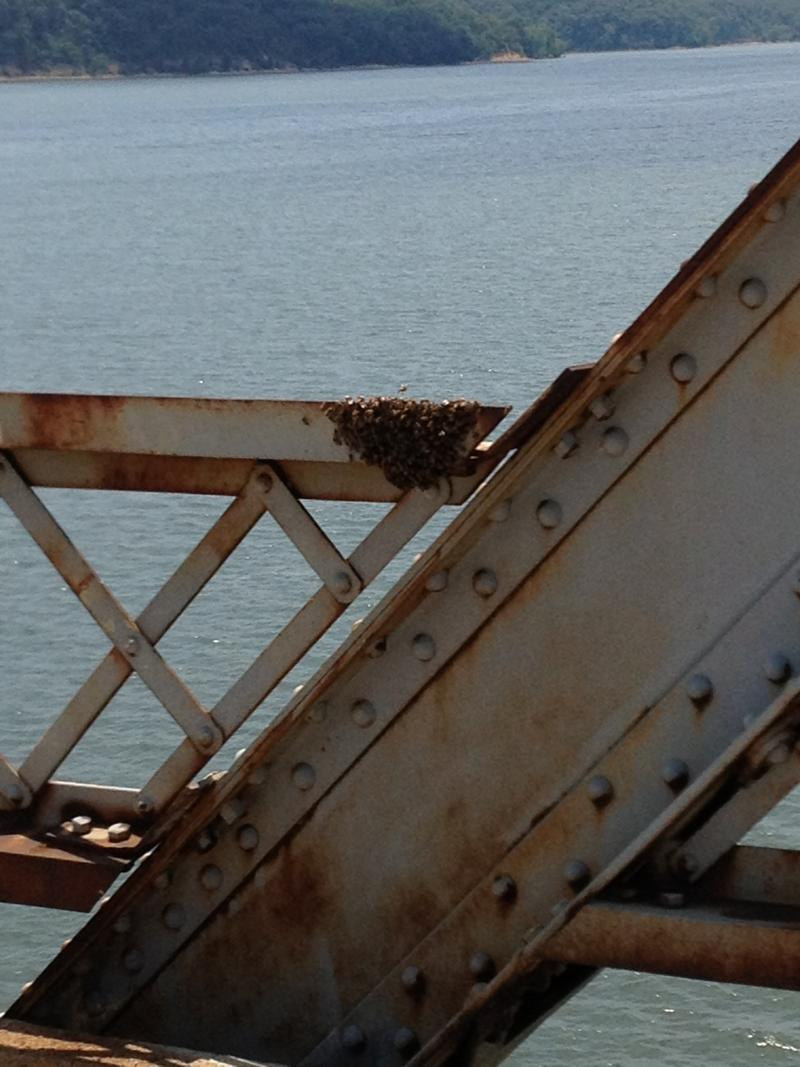 Surface rust and a swarm of bees on bridge.