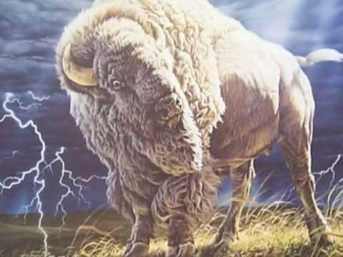 Hundreds of Native Americans are expected to gather Saturday at a former dairy farm in Goshen, Conn., to hold a sacred naming ceremony for what they hope is a rare white buffalo.