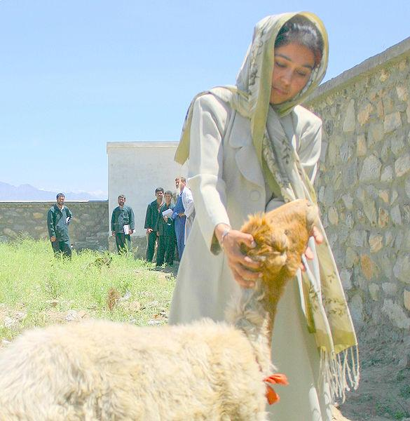 In March 2006, Fareba Miriam became the first woman to enroll in a para-veterinarian training program that USAID is running in Afghanistan.