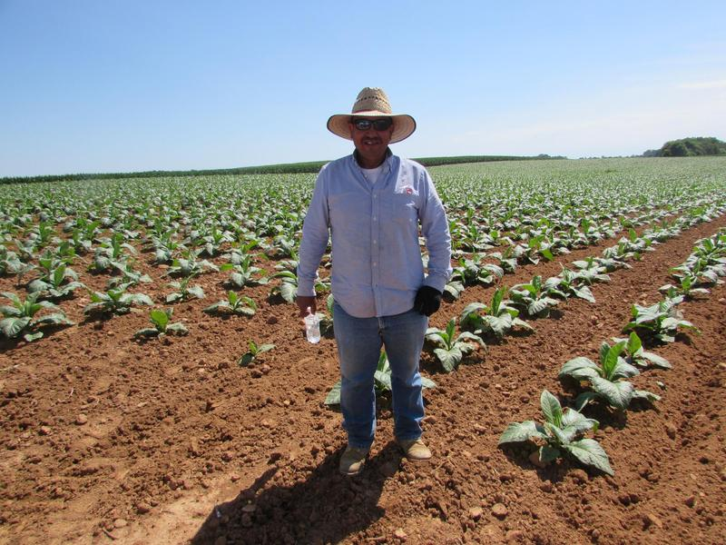 Juan Aldana Regoza has been working on Phil Holliday's tobacco farm in Logan County, Kentucky for 21 years.