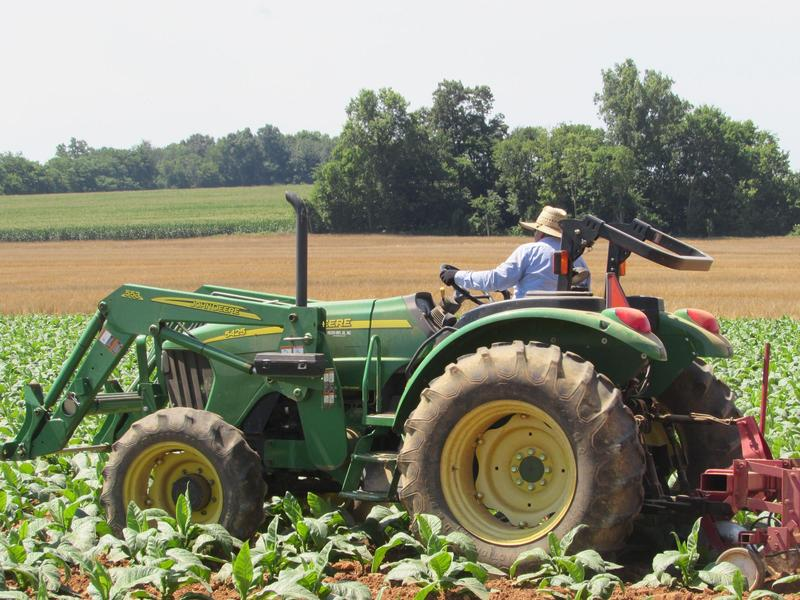 Juan Aldana Regoza drives the tractor on Phil Holliday's tobacco farm in Logan County, Kentucky.