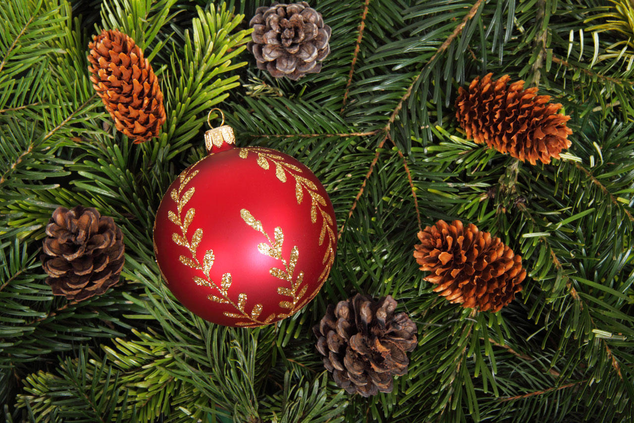 Christmas Tree Disposal.Christmas Tree Disposal Options Wkms
