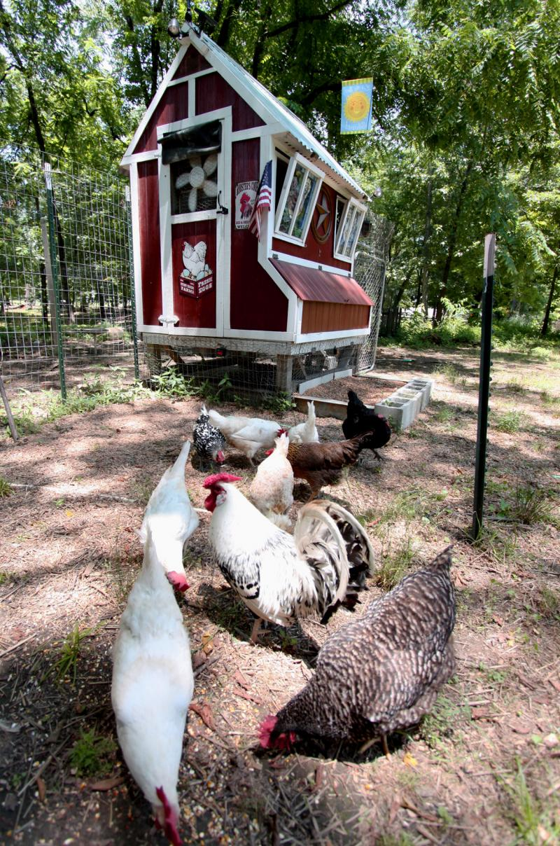 "Mark Henderson and Dennis Clark named their coop the ""Chicken Palace Cathedral."""