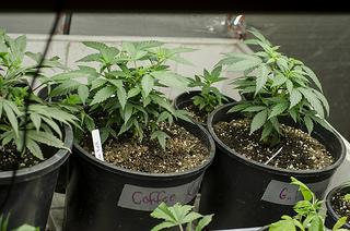 ResponsibleOhio spent $21.5 million to try to convince voters to approve the amendment.