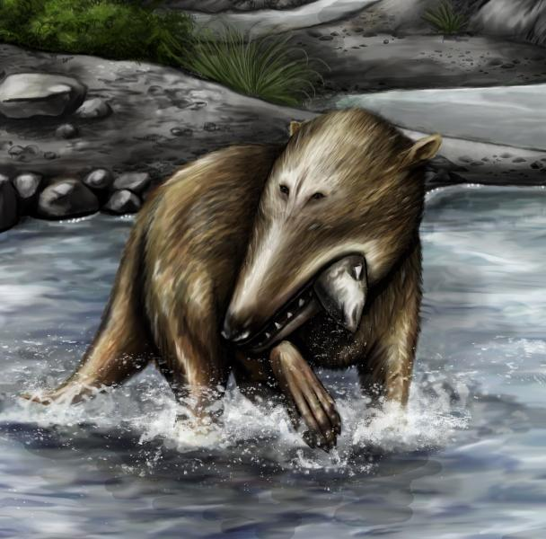 Pakicetus sits at the base of the whale family tree, pictured here hunting fish 49 million years ago in what is now northern Pakistan.