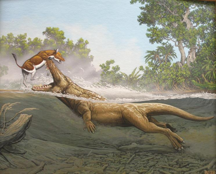 A painting of Ambulocetus attacking an early ancestor of the horse hangs in Hans Thewissen's lab.