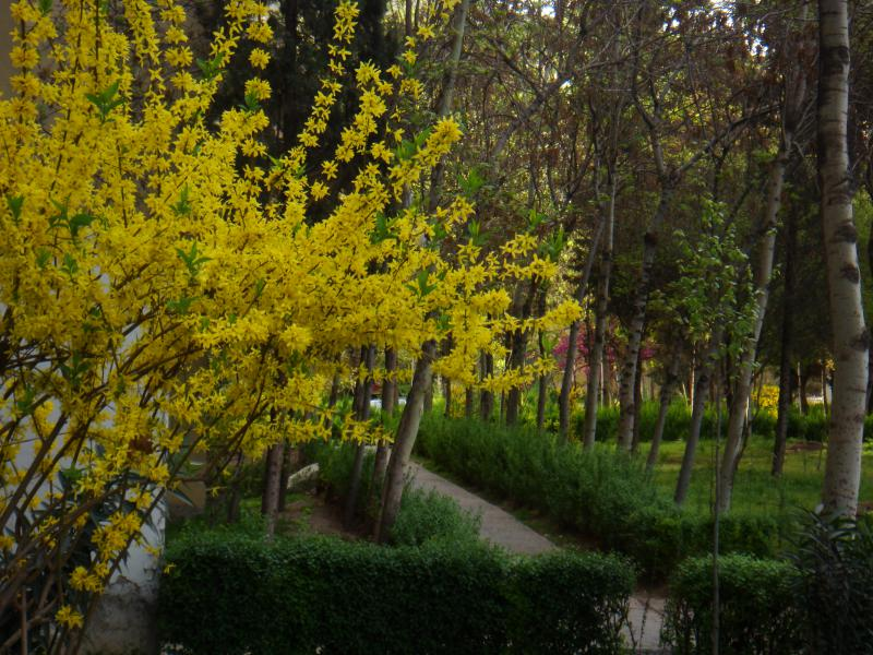 Photo of trees blooming in springtime