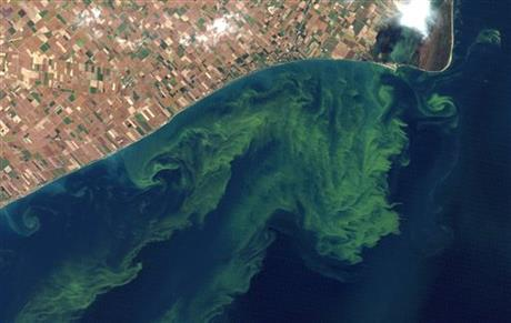 satellite of algae bloom