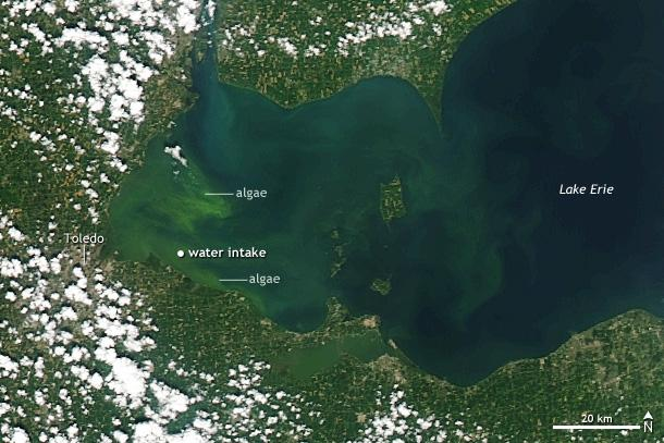 photo of Algae bloom on Lake Erie, Summer 2014