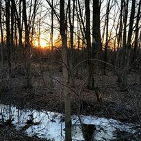 Black Swamp in winter