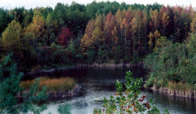 Wayne Nationa Forest in SE Ohio