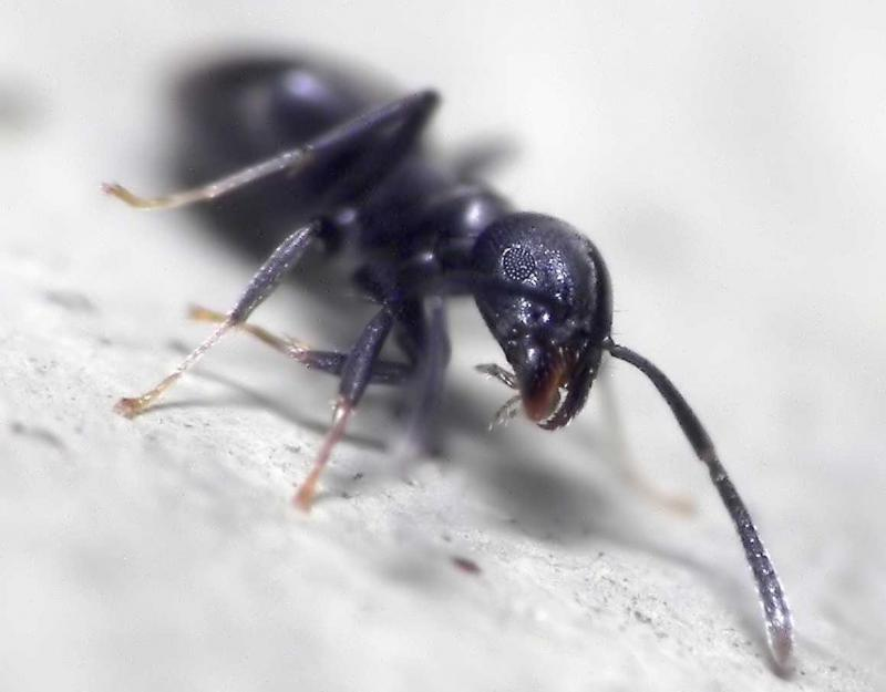 Ants are among earth's most successful creatures, but new research shows that many ant species will lose out when climate change stresses the environment.