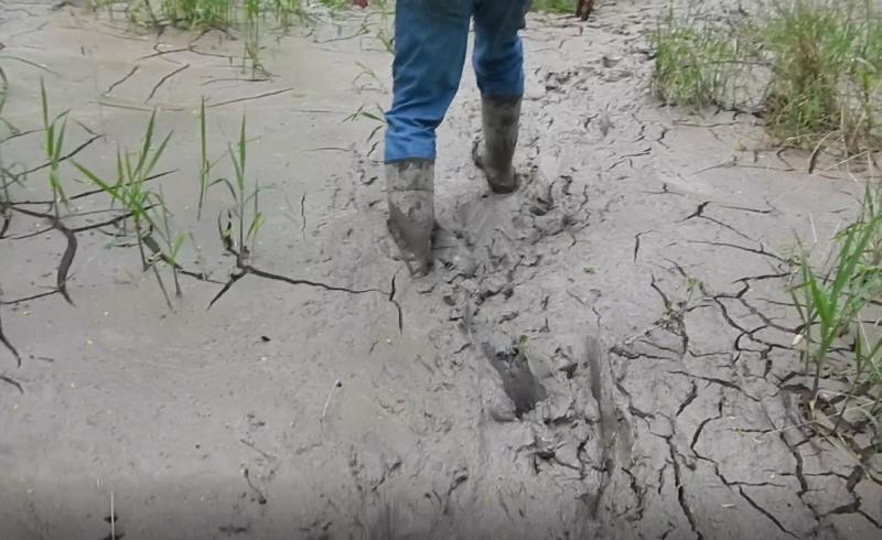 photo of Stark County wetlands