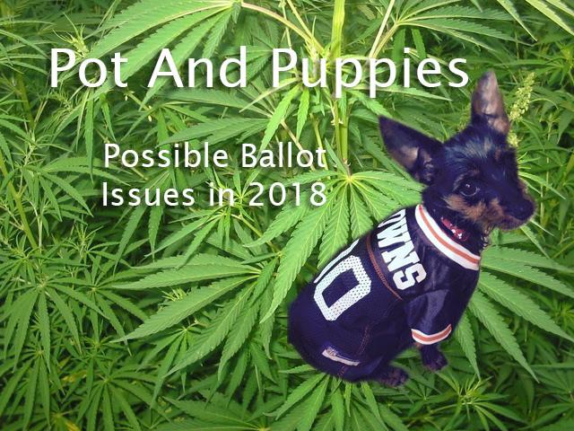 photo of Pot and Puppies