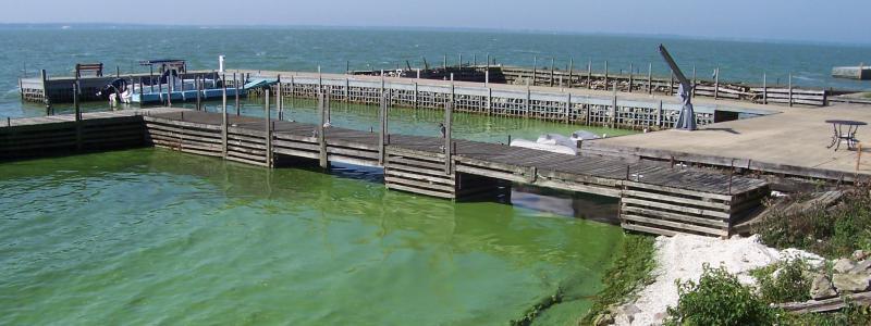 Algae around a dock at kelley's Island