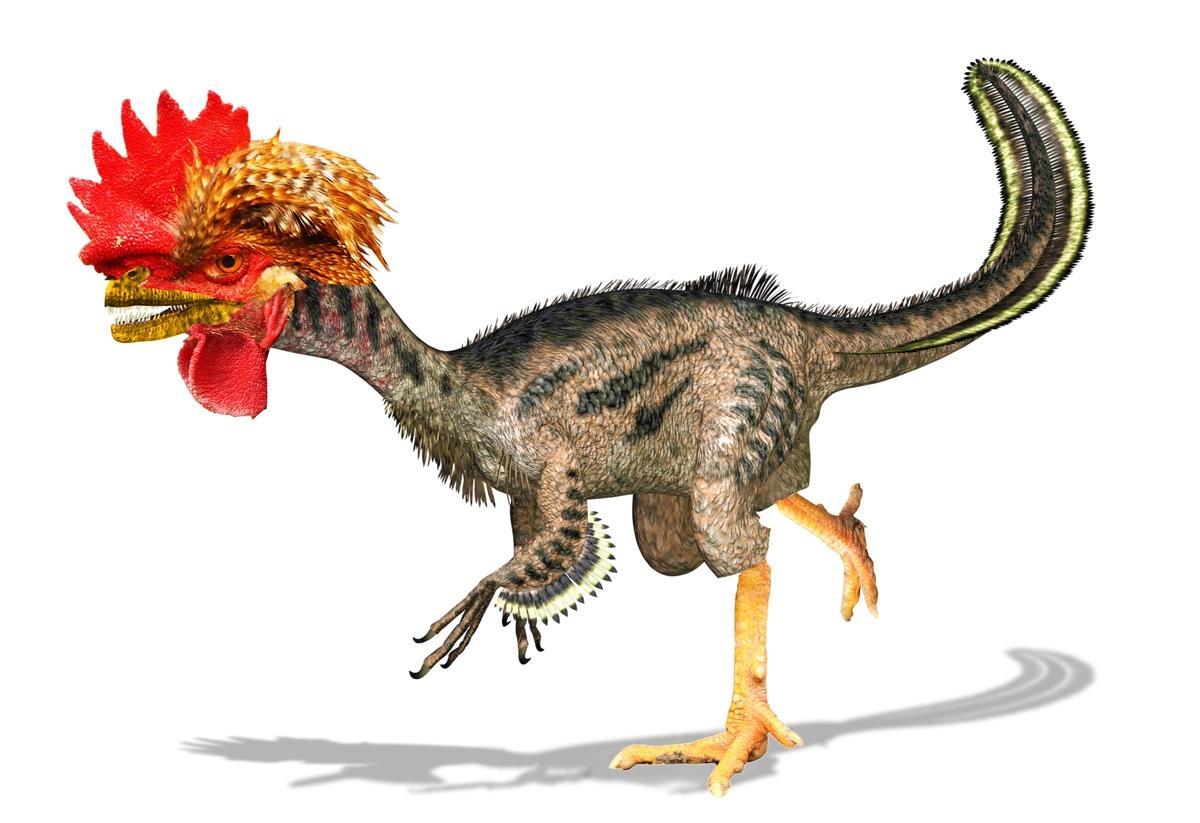 how to find the dinosaur lurking inside your chicken wksu