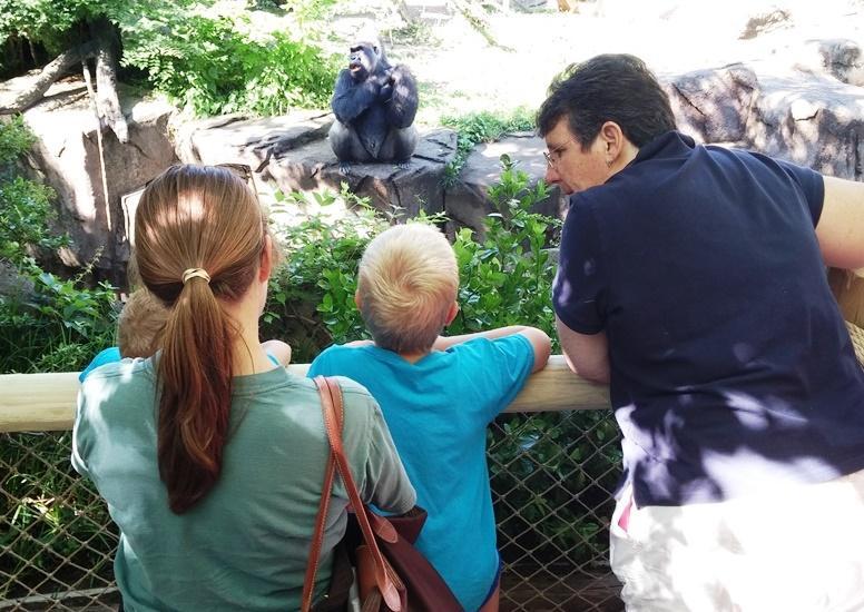 Mom Won't be Charged in Cincinnati Zoo Gorilla's Death