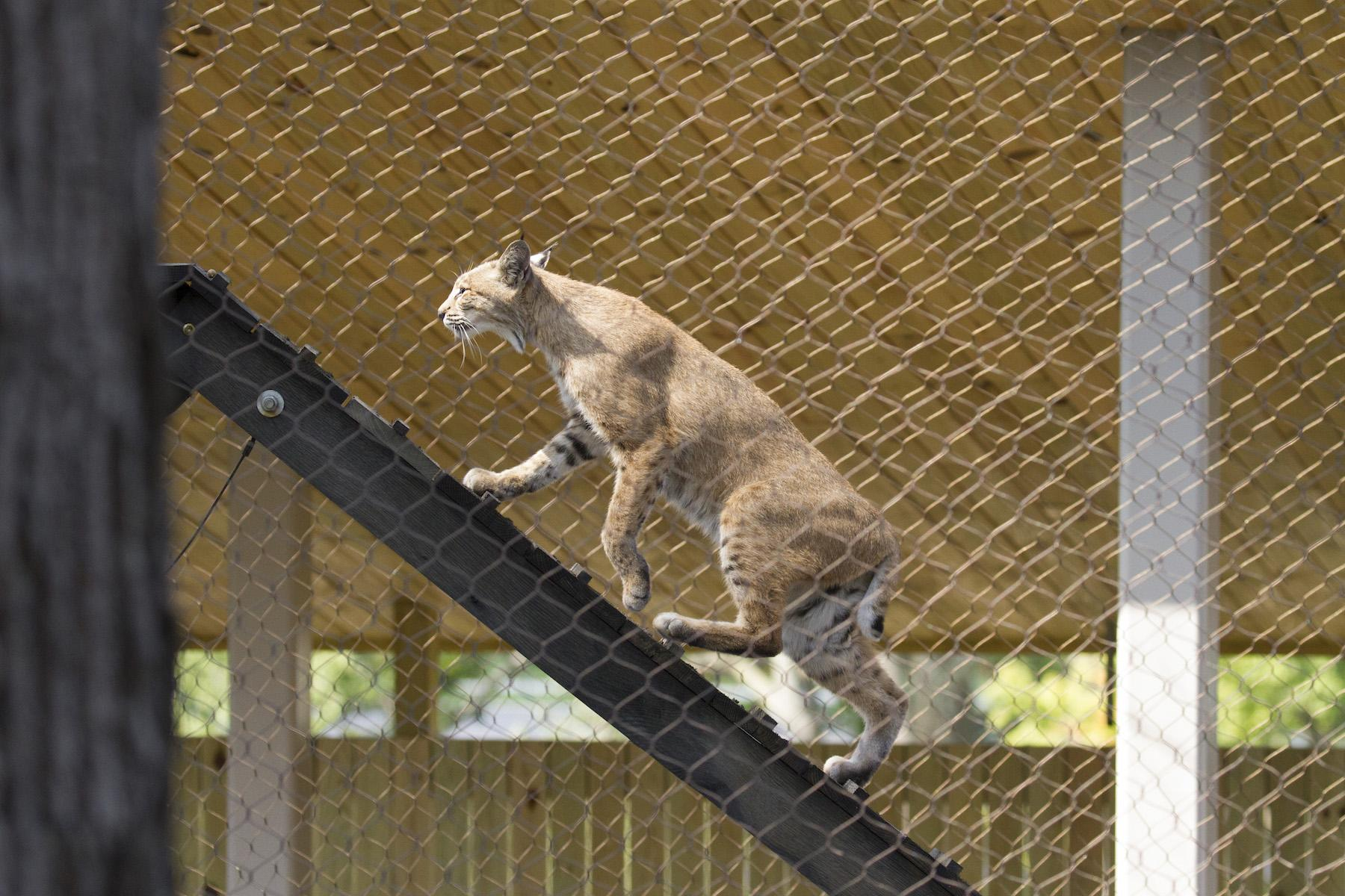 Animals Can Take The High Road At The New Perkins Wildlife Garden At