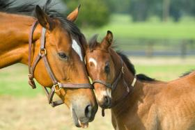 Kentucky's horse industry is worth an estimated $6.3 billion.