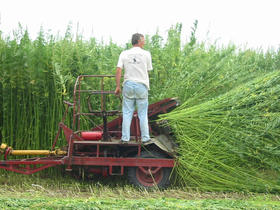 Hemp can now be planted in Kentucky following a legal battle between Kentucky Agriculture Commissioner James Comer and the federal government.
