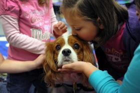 Ben, a 6-year-old therapy dog, works with hearing-impaired school kids and assists therapists in healthcare facilities. He visits Country Heights Elementary School every Wednesday. Photo by Brigitte N. Brantley