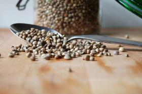 Hemp seeds have been legally planted in Kentucky recently for the first time in decades.