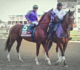 California Chrome on Kentucky Derby day.