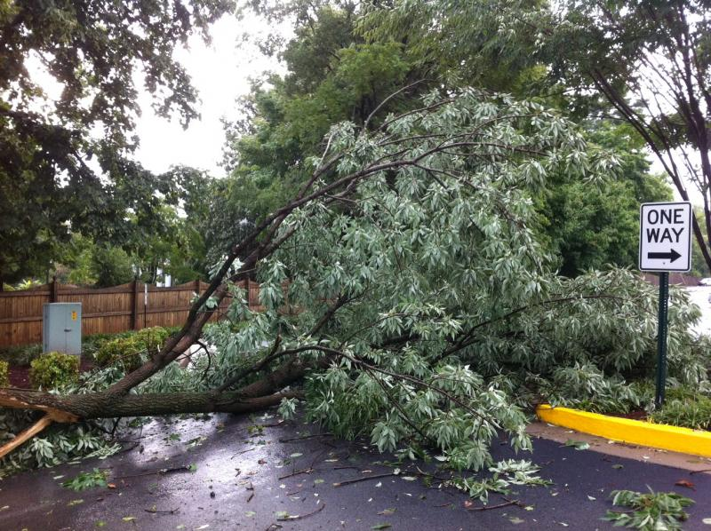 A downed tree blocked the entrance to the Chestnut Street parking lot at WKU.