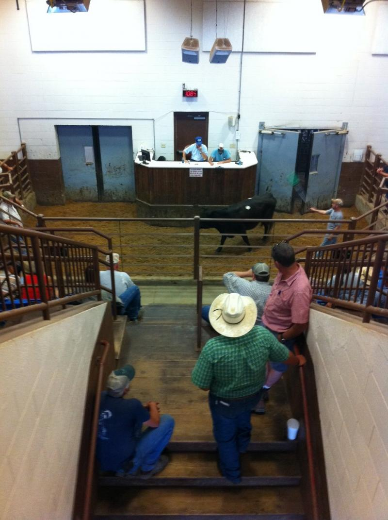 Buyers and sellers take part in a recent livestock auction in Barren County.