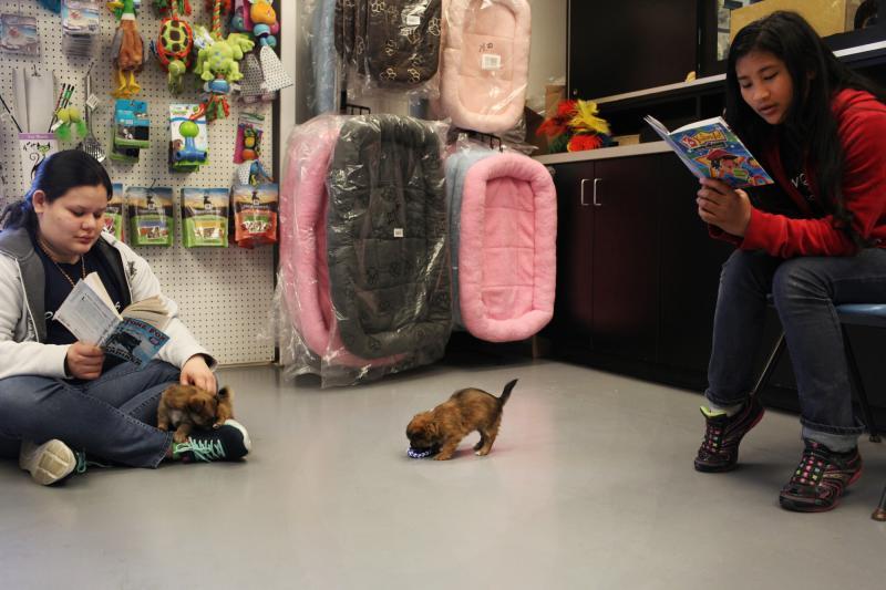 Graciella Ventura, originally of El Salvador (left) and Soe Meh, originally from Thailand, read to puppies at the Warren County Humane Society on Tuesday, April 16, 2014