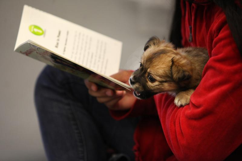 A puppy nips at a book Soe Meh is reading at the Warren County Humane Society on Wednesday, April 16, 2014.