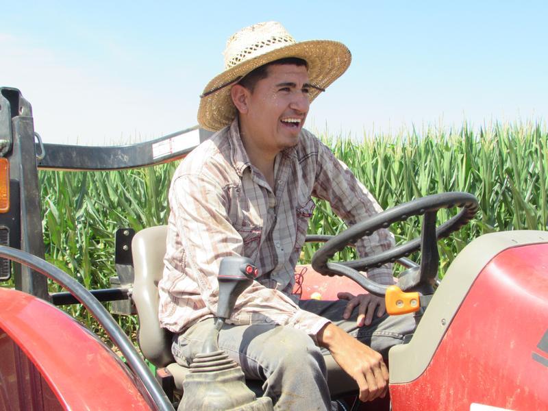 Irvin Aldana Escobar works with his father, Juan Aldana Regoza, on Phil Holliday's tobacco farm in Kentucky