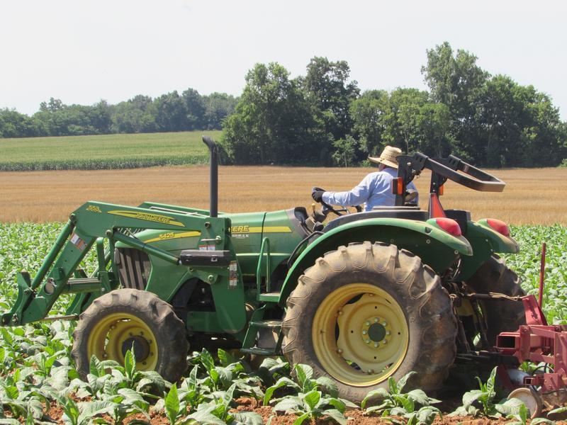 Juan Aldana Regoza drives the tractor on Phil Holliday's tobacco farm in Logan County, Kentucky.