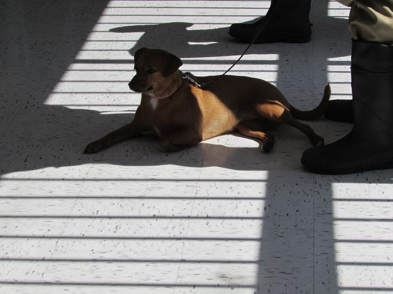 Death Row Dogs training session at Green River Correctional Complex in Muhlenberg County.