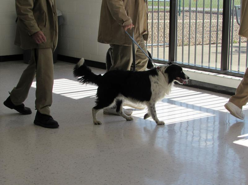 Trainers and their dogs leave the training session at Green River Correctional Complex.