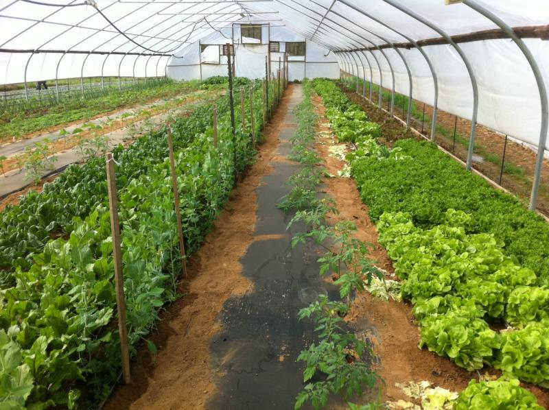 One of Joe O'Daniel's high tunnels at his Warren County farm