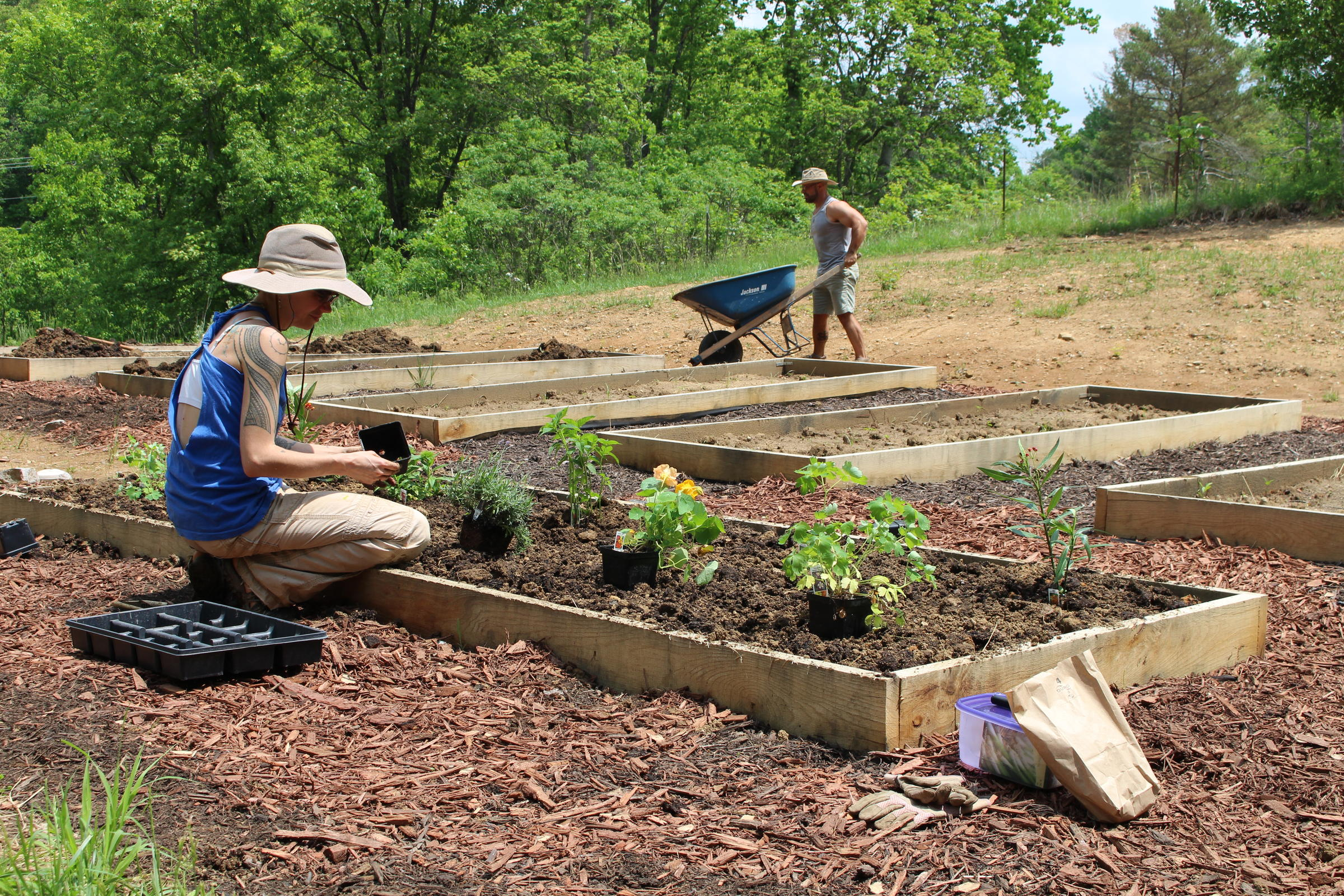 Back To The Garden: How Green Thumbs Help With Addiction Recovery ...