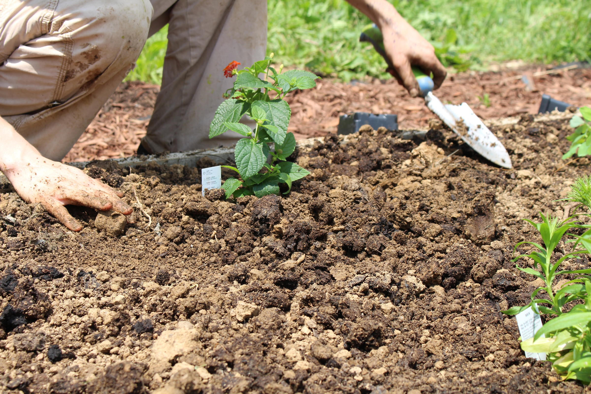 back to the garden how green thumbs help with addiction recovery