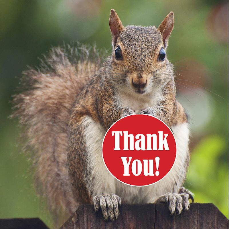 Картинки по запросу thank you squirrel