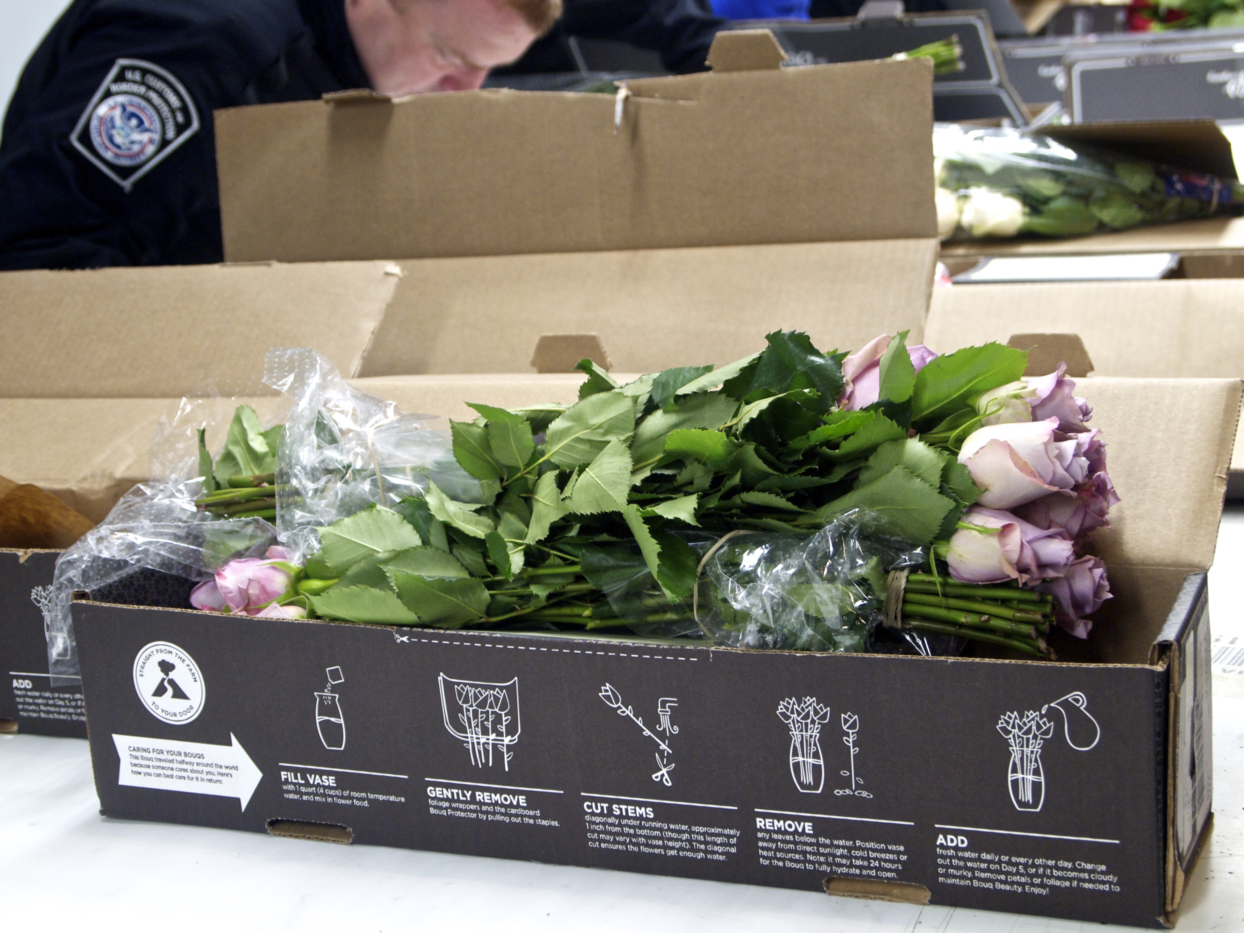 Us customs and border protection inspect flower shipments before us customs and border protection inspect flower shipments before valentines day wlrn mightylinksfo