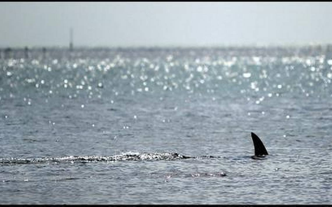 Heres Another Reason To Love South Floridas Clear Ocean It Keeps Sharks Away From You
