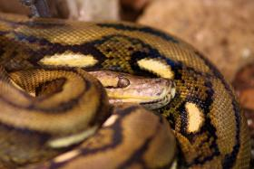 A bill aimed at curbing Florida's python problem has hit a snag.