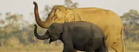 The Miami Wildlife Conservation Film Festival returns this April.
