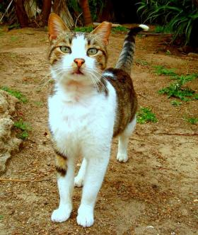 Feral cats are a contentious topic in Florida.