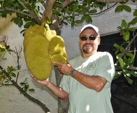 Noel Ramos poses with his jackfruit tree, one of two in the garden of his home in Coral Springs.